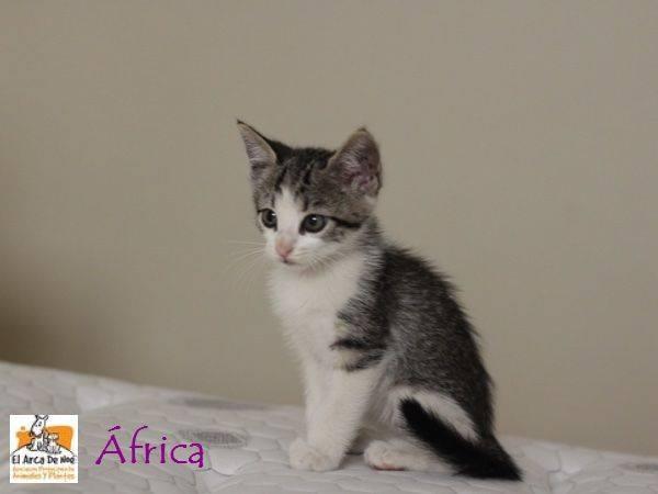 AFRICA - TIGREE BLANCHE - ES (Sole) 10426810