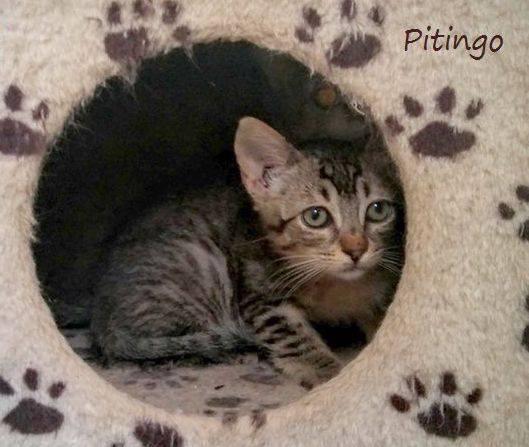 PITINGO - GRIS - ES (Sole) 19748516