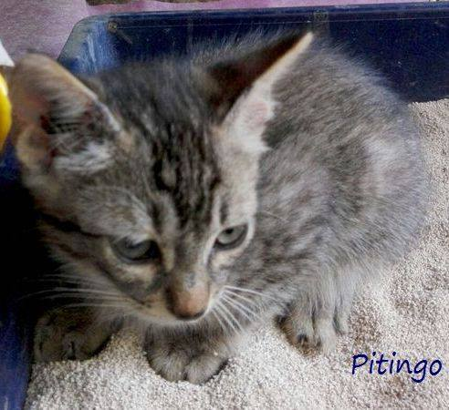 PITINGO - GRIS - ES (Sole) 19875513