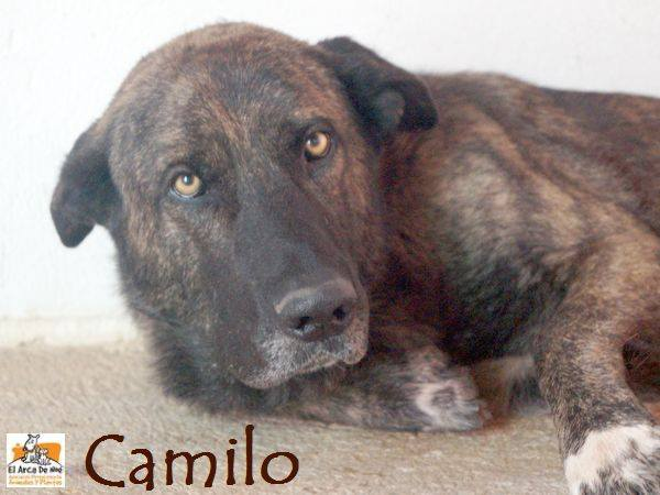CAMILO - CROISE MATIN ESPAGNOL - EN FA DANS LE 94 20228314