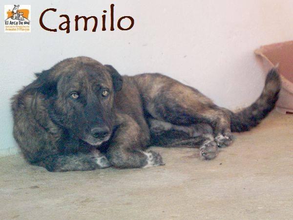 CAMILO - CROISE MATIN ESPAGNOL - EN FA DANS LE 94 20228814
