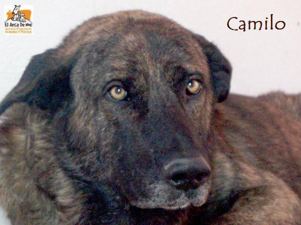 CAMILO - CROISE MATIN ESPAGNOL - EN FA DANS LE 94 20229216