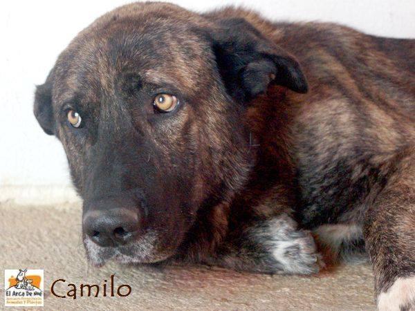 CAMILO - CROISE MATIN ESPAGNOL - EN FA DANS LE 94 20245614