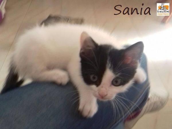 SANIA - NOIRE ET BLANCHE - ES (Sole) 20525911