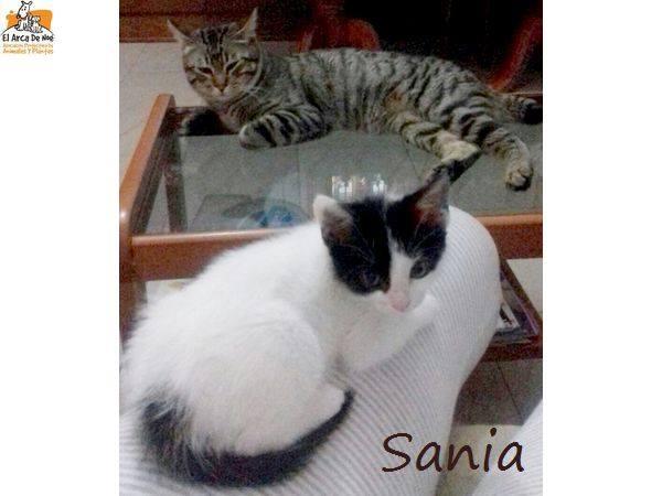 SANIA - NOIRE ET BLANCHE - ES (Sole) 20604611