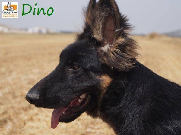 DINO - CROISE BERGER ALLEMAND - ES (Sole) 20708210