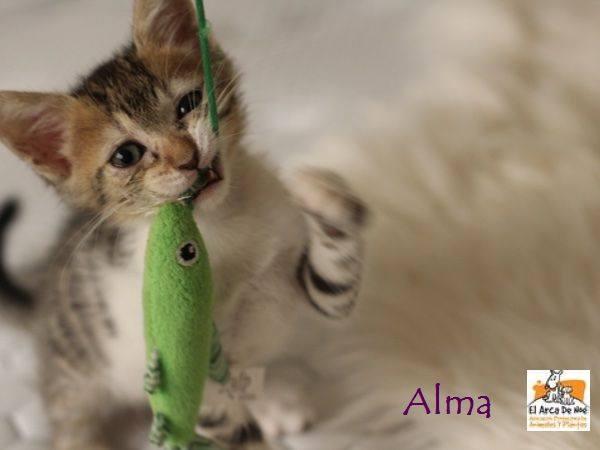 ALMA - TIGREE BLANCHE - ES (Sole) 21034210