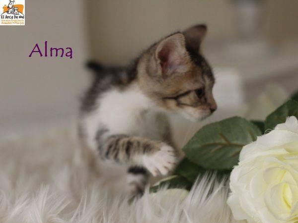 ALMA - TIGREE BLANCHE - ES (Sole) 21034512