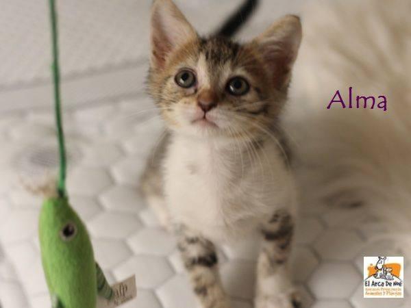 ALMA - TIGREE BLANCHE - ES (Sole) 21077610