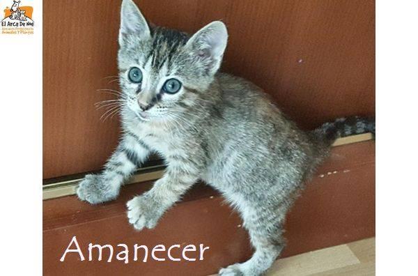AMANECER - GRISE - ES (Sole) 21077712