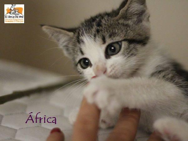AFRICA - TIGREE BLANCHE - ES (Sole) 21078514
