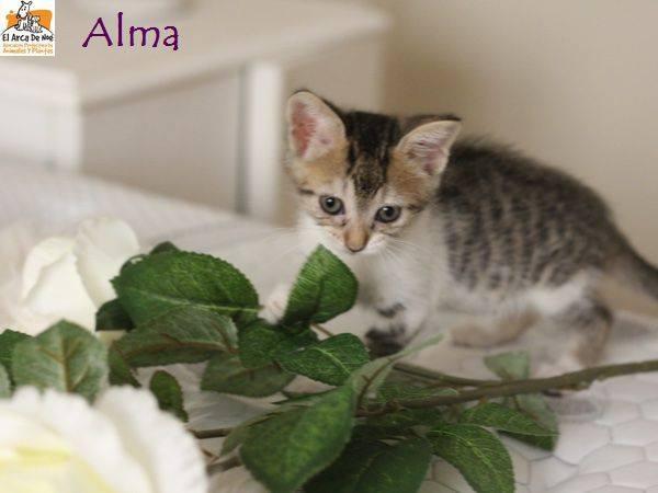 ALMA - TIGREE BLANCHE - ES (Sole) 21078612