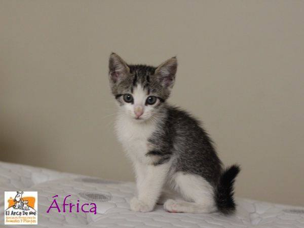 AFRICA - TIGREE BLANCHE - ES (Sole) 21105914