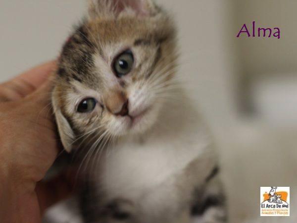 ALMA - TIGREE BLANCHE - ES (Sole) 21150212
