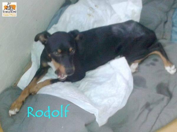 RODOLF - NOIR ET FEU - ES (Sole) 21230711