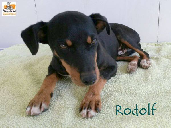 RODOLF - NOIR ET FEU - ES (Sole) 21230912