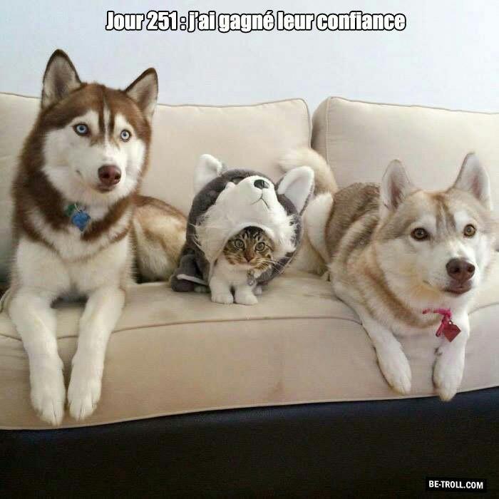Mort de rire — parce que j'ai le sens de l'humour ! - Page 3 17f97c10