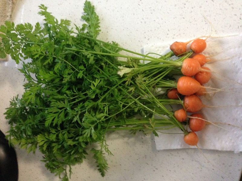 Carrot Week 2017! - Page 6 Img_6235
