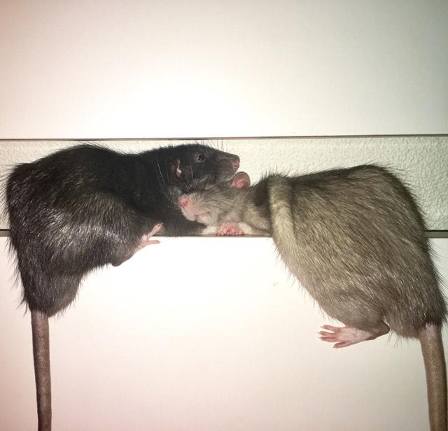 Django & Milo, mes petits fripouilles d'amour ! - Page 4 20731211
