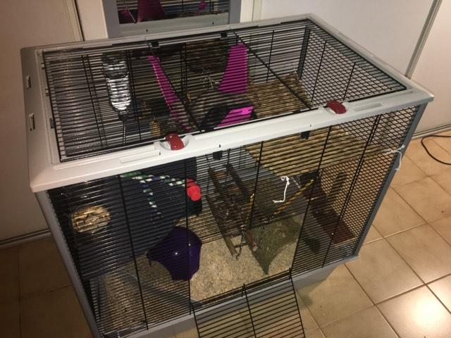 Photos de vos cages - Page 10 21076910