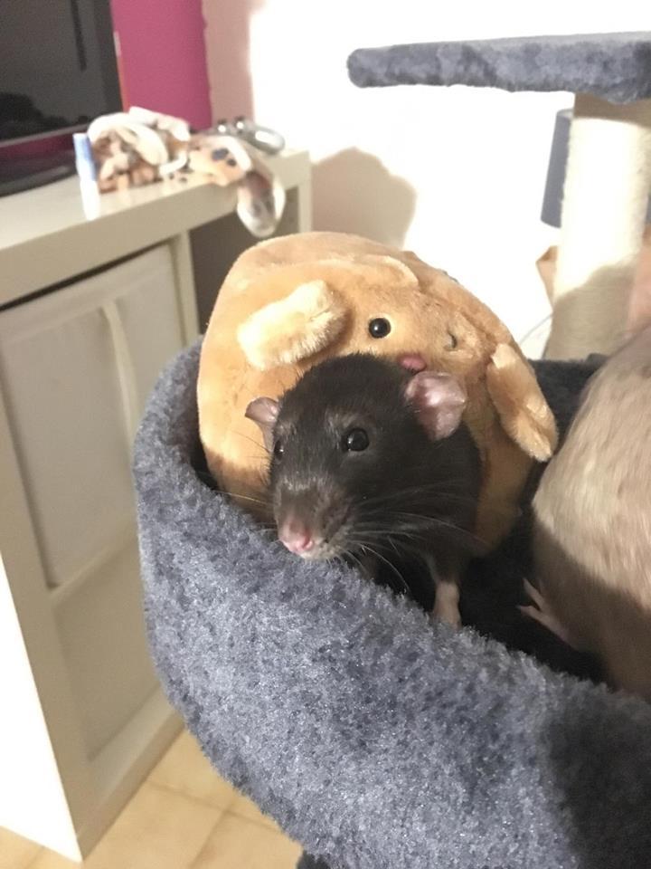 Django & Milo, mes petits fripouilles d'amour ! - Page 2 21850310