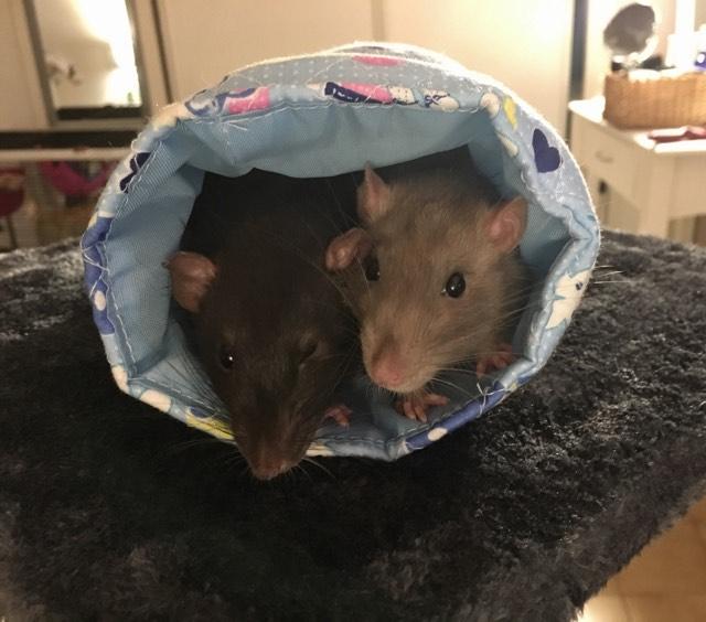 Django & Milo, mes petits fripouilles d'amour ! - Page 2 22215010