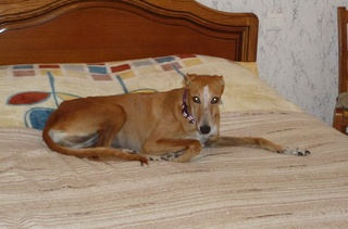 MELLINA petite crevette rousse Scooby France  Adoptée  - Page 2 2017_018