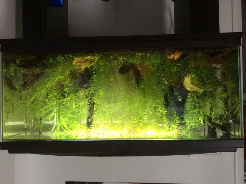 75L planté Img_0510