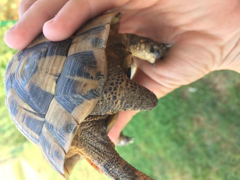 Identification de ma tortue trouvée  Img_3616