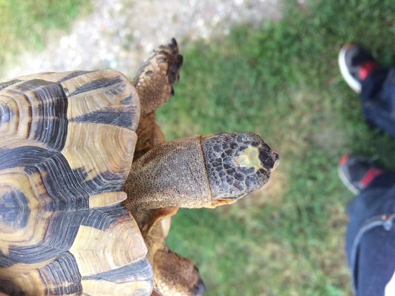 Identification de ma tortue trouvée  Img_3617
