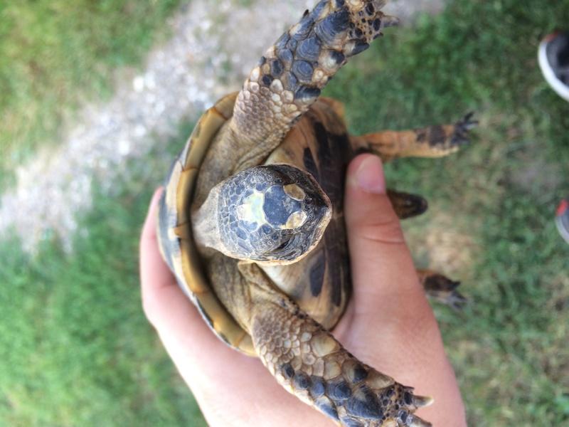 Identification de ma tortue trouvée  Img_3618