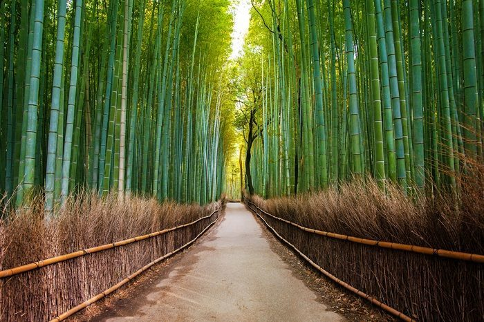 Le tunnel de bambous d'Arashiyama - Japon Ob_2c711