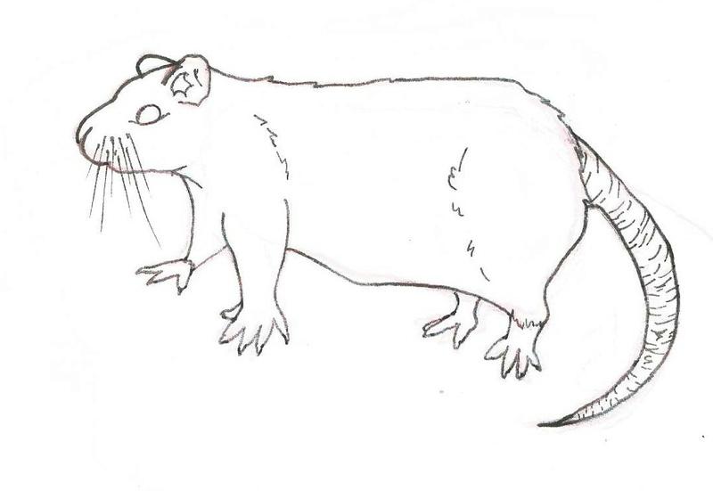Animal(s) mais non ani'maux - Page 2 Un_rat10