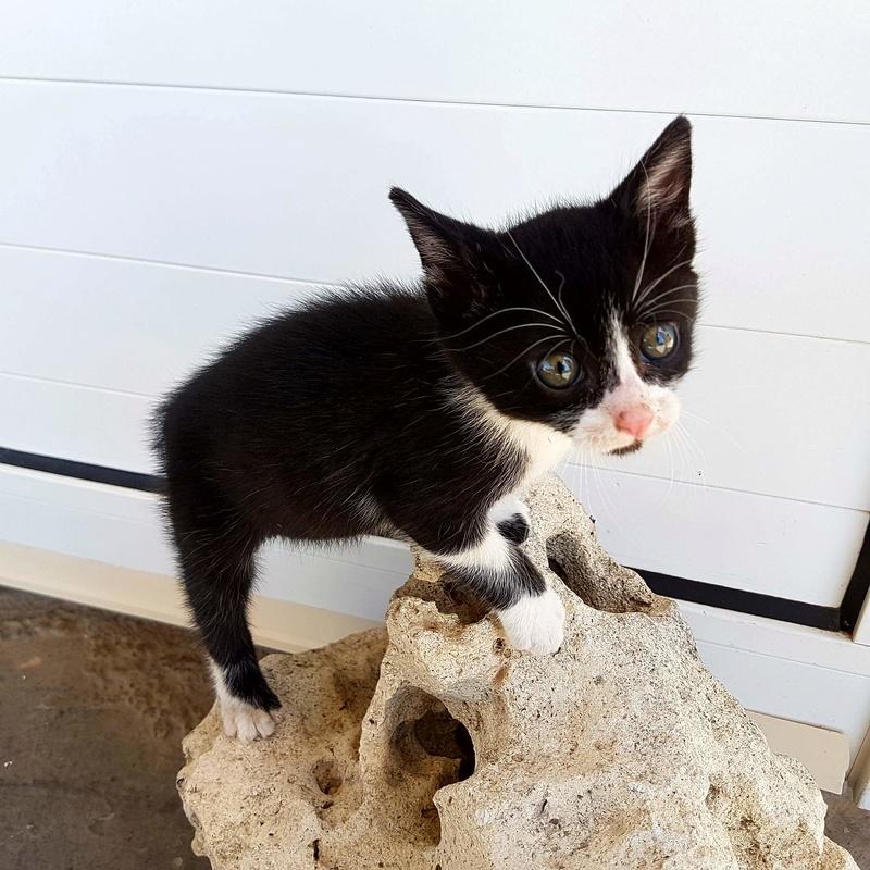 Βοήθεια με γατάκι αδέσποτο 20170510