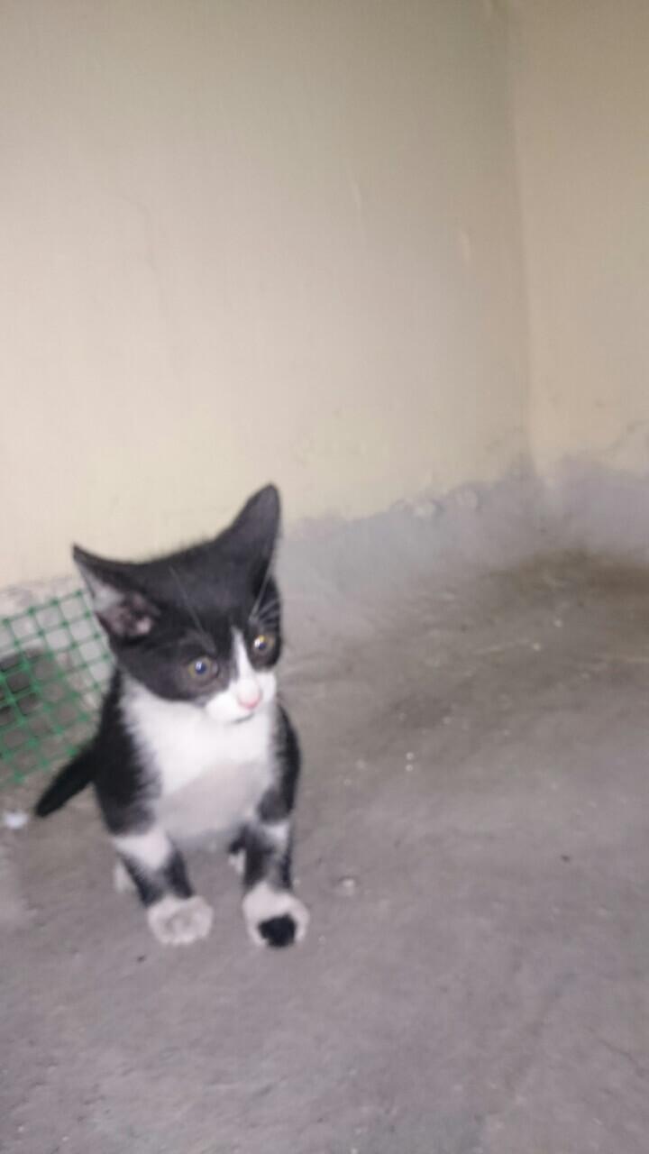 Βοήθεια με γατάκι αδέσποτο Image-10
