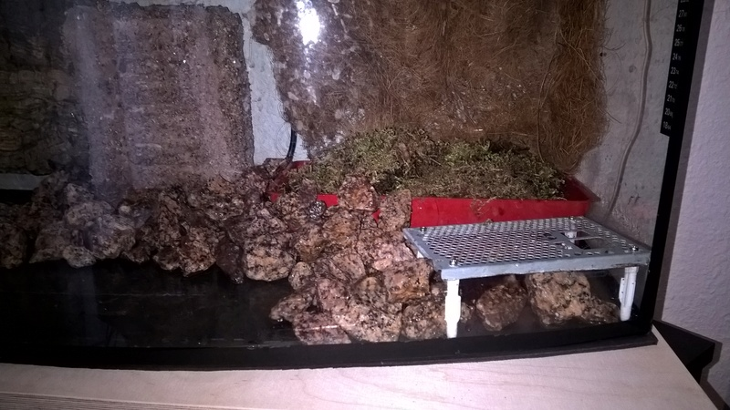 Bau meines Terrariums Wp_20136