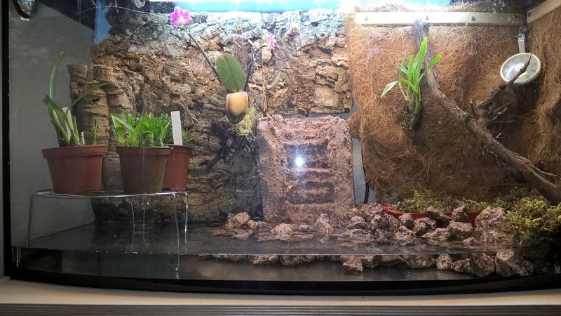 Bau meines Terrariums Wp_20143