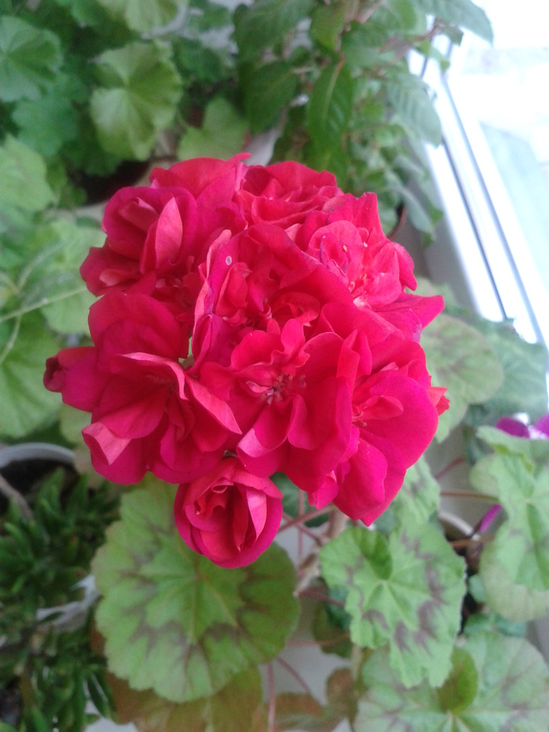 Моё цветочное богатство - Страница 32 Aia-0110