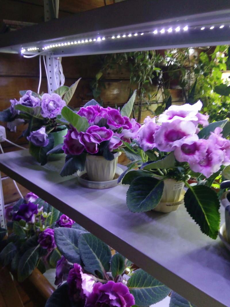 Моё цветочное богатство - Страница 32 Aiazaa10