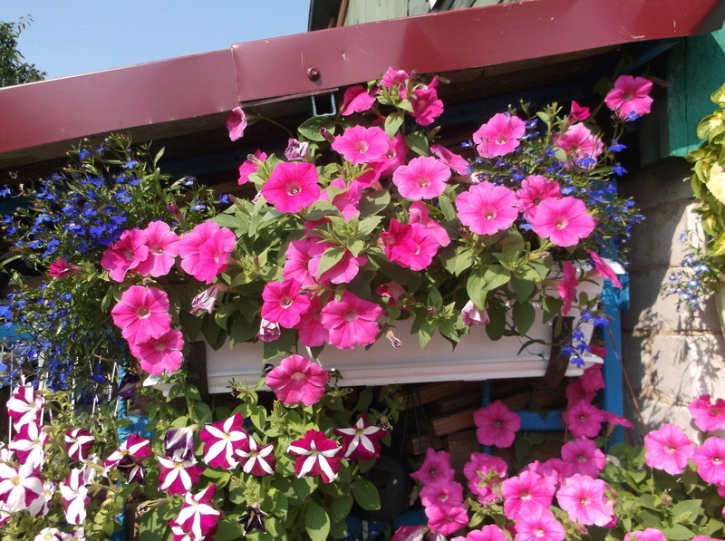 Моё цветочное богатство - Страница 32 Eia-ie10