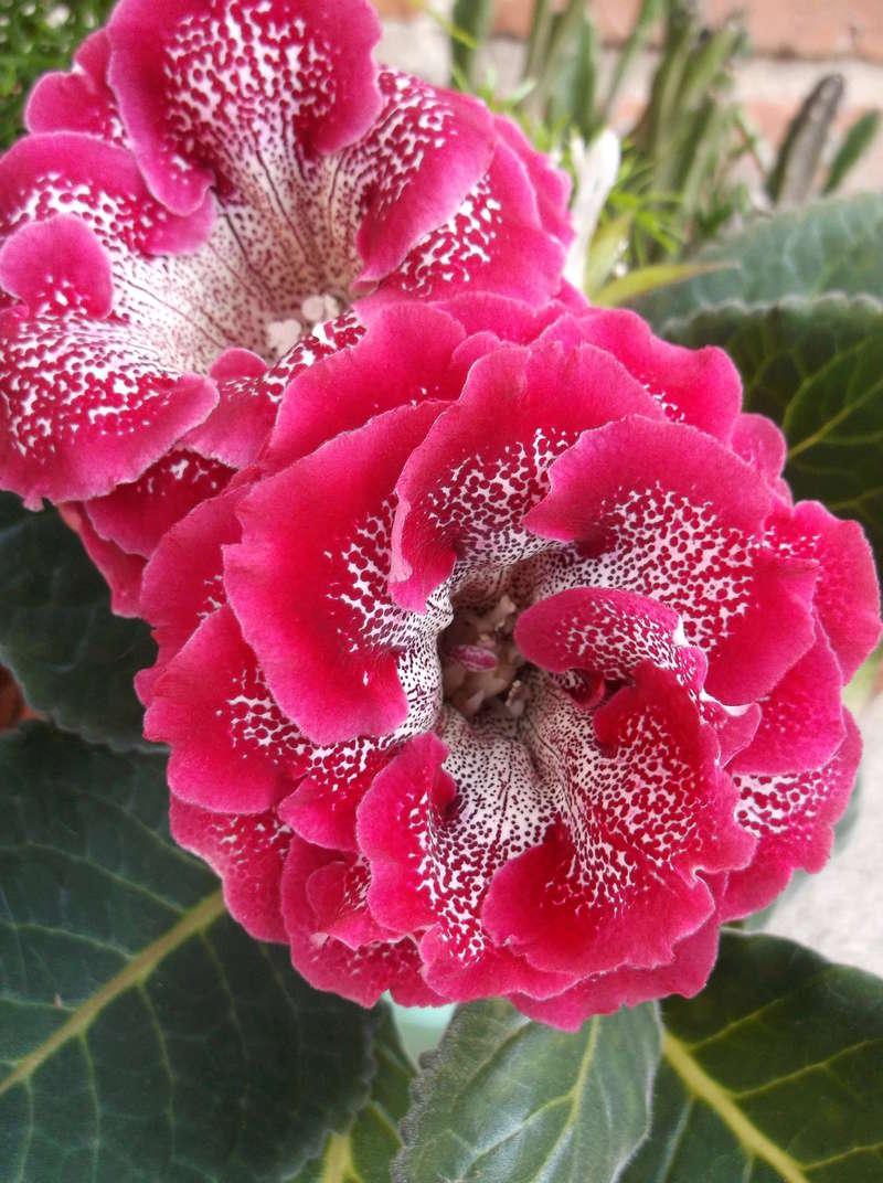 Моё цветочное богатство - Страница 32 Eia-ie13