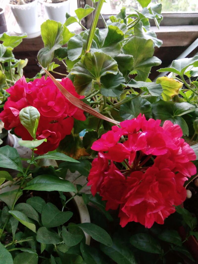Моё цветочное богатство - Страница 32 Image10