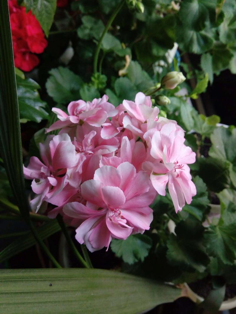 Моё цветочное богатство - Страница 32 Image110