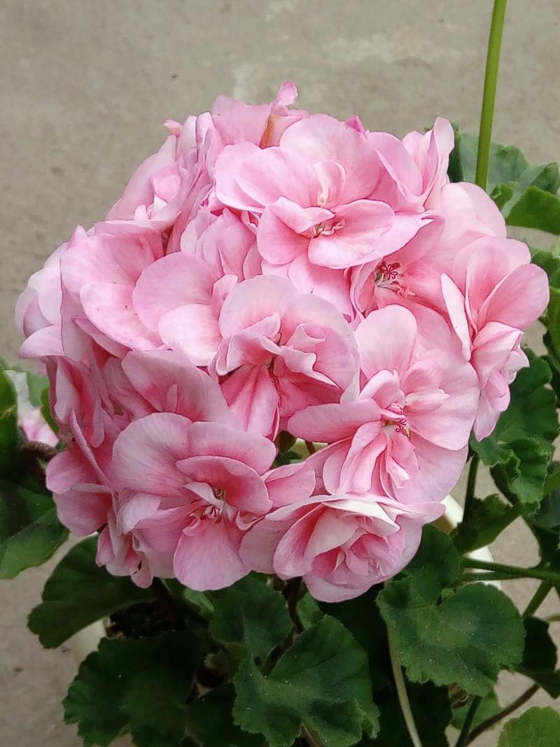 Моё цветочное богатство - Страница 32 Image111