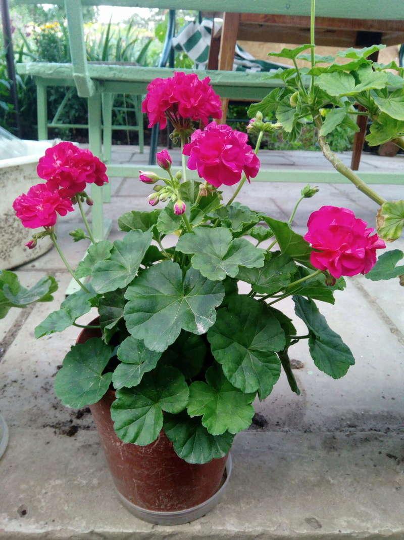 Моё цветочное богатство - Страница 32 Image112