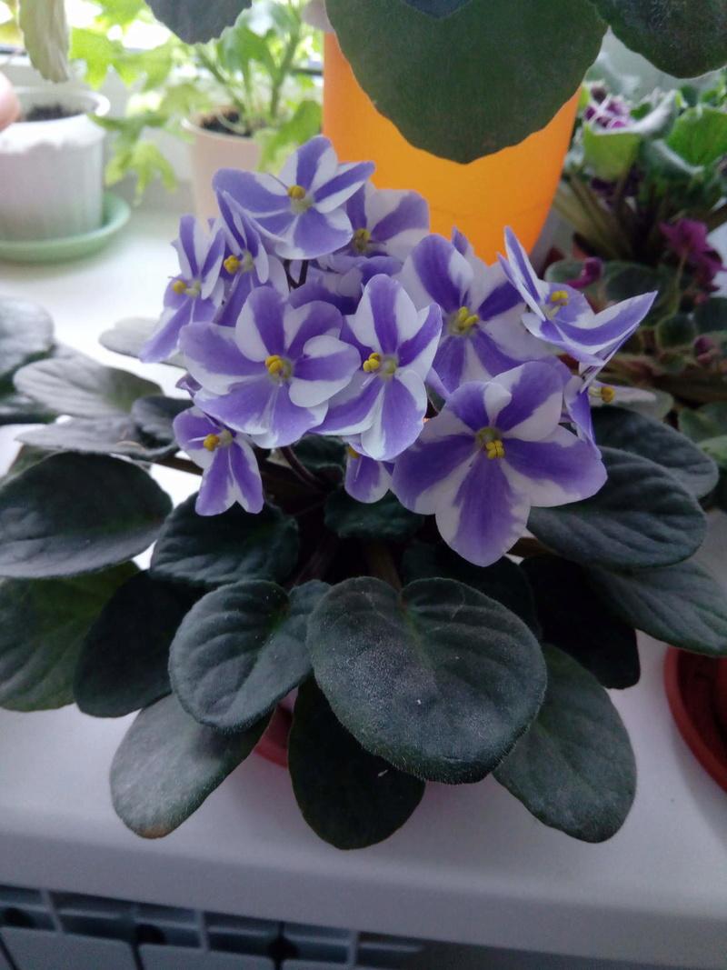 Моё цветочное богатство - Страница 32 Image117