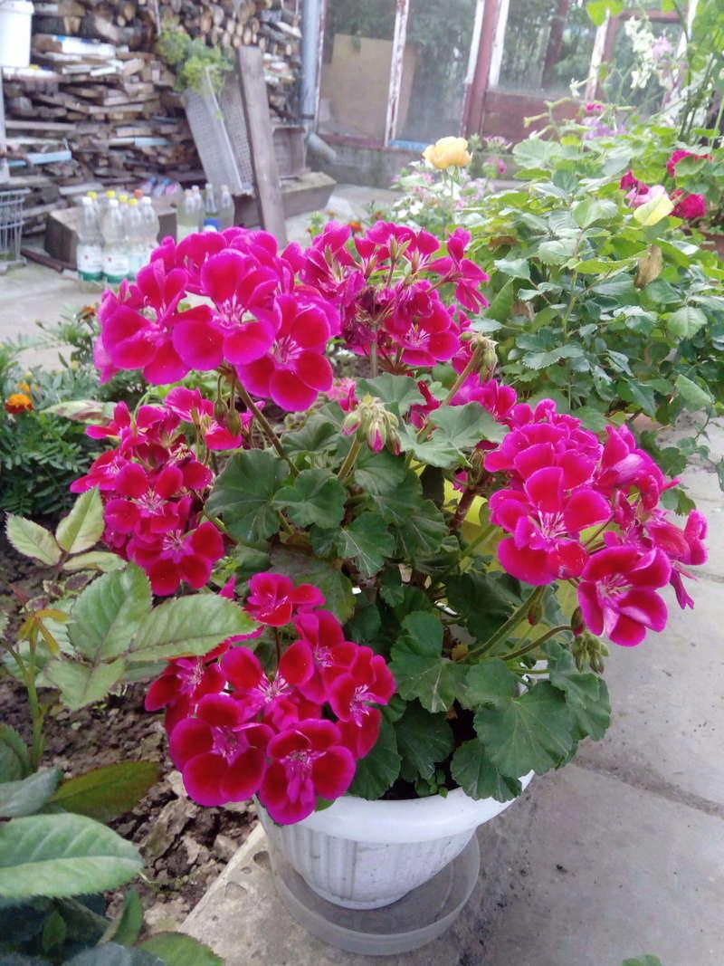 Моё цветочное богатство - Страница 32 Image210