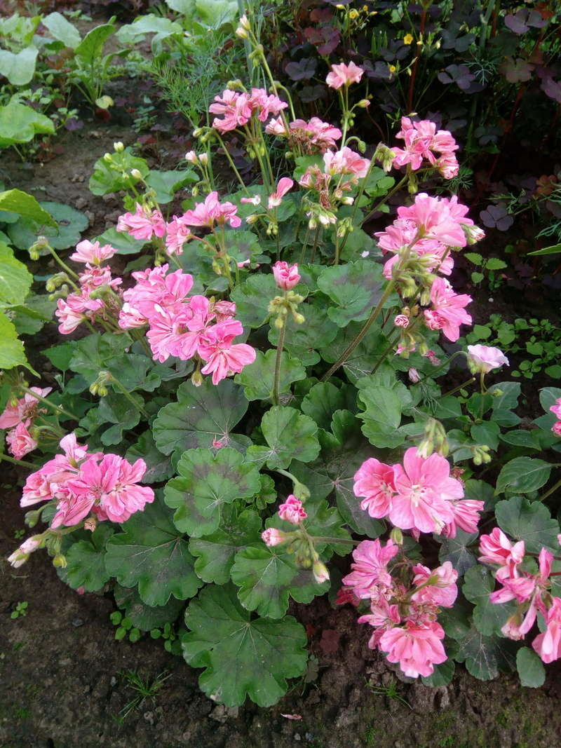 Моё цветочное богатство - Страница 32 Image211