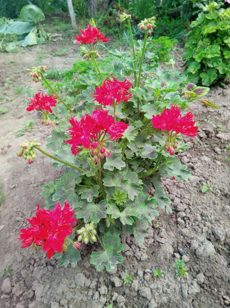 Моё цветочное богатство - Страница 32 Image213