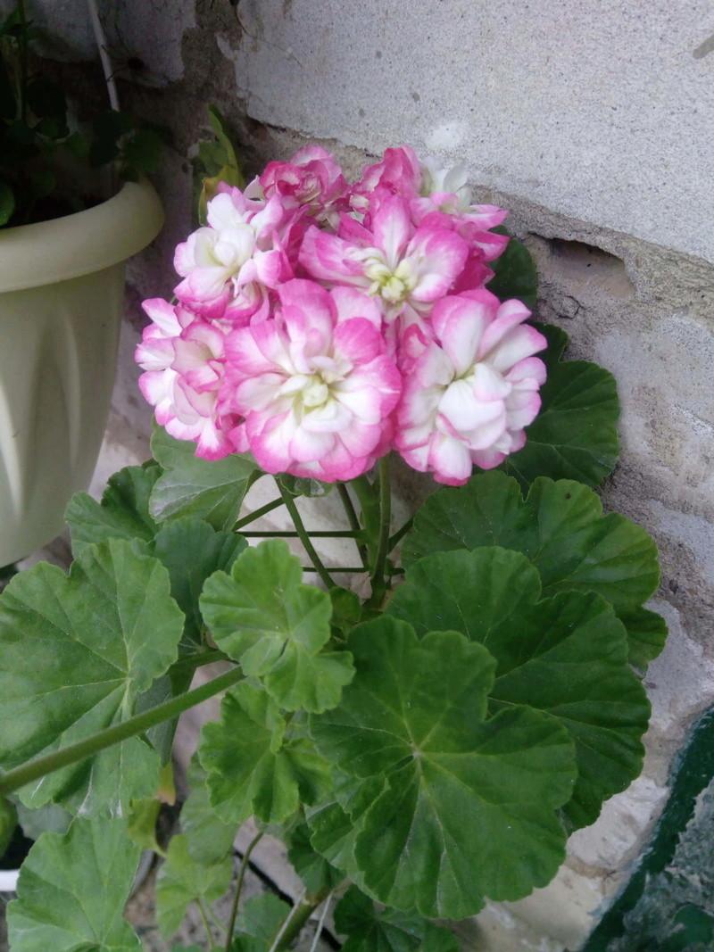 Моё цветочное богатство - Страница 32 Image214